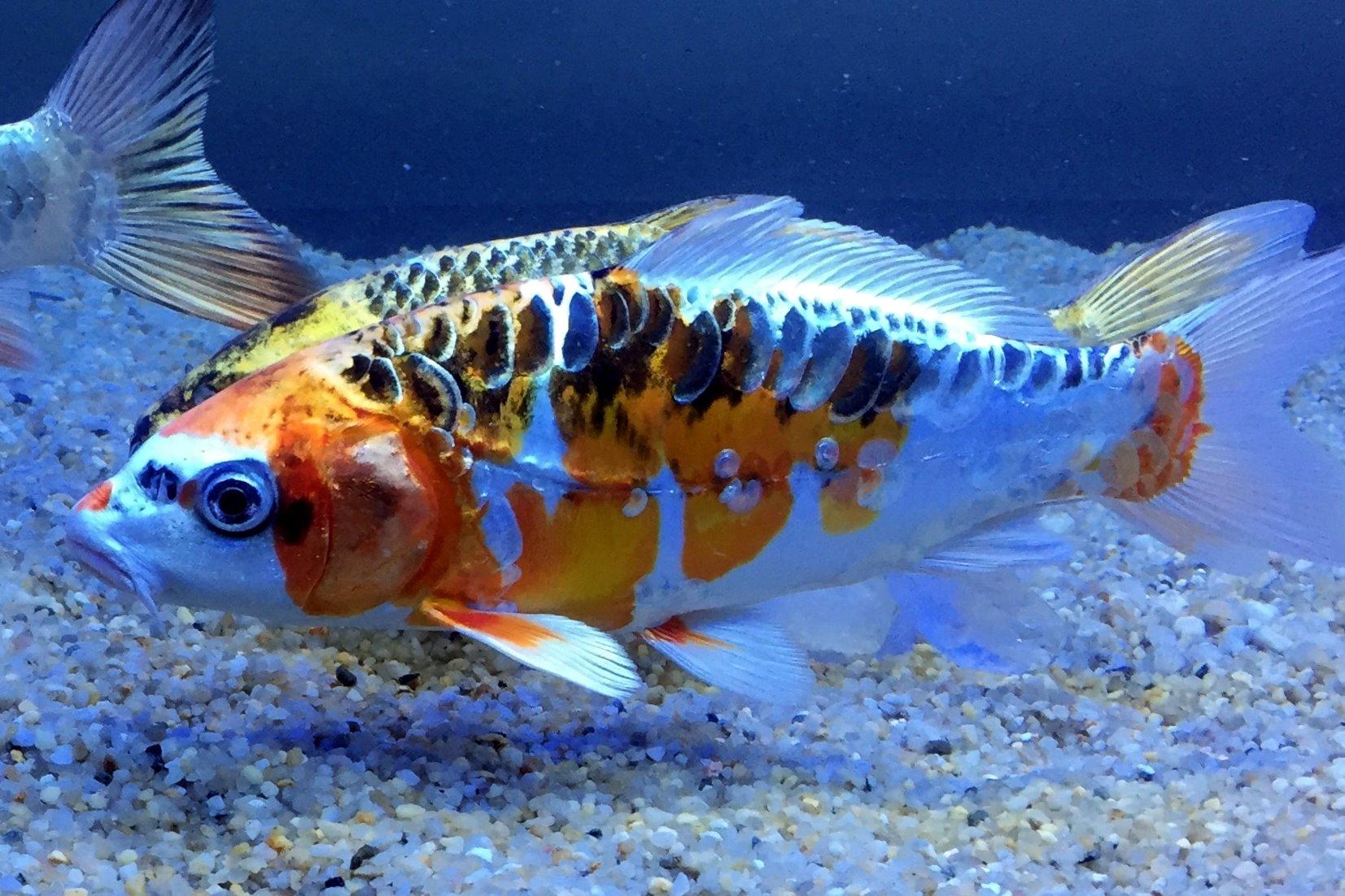 Aquarium Gravel Euroquarz Gmbh